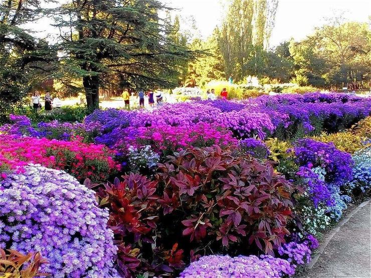 Ботанический сад «КФУ им. Вернадского»